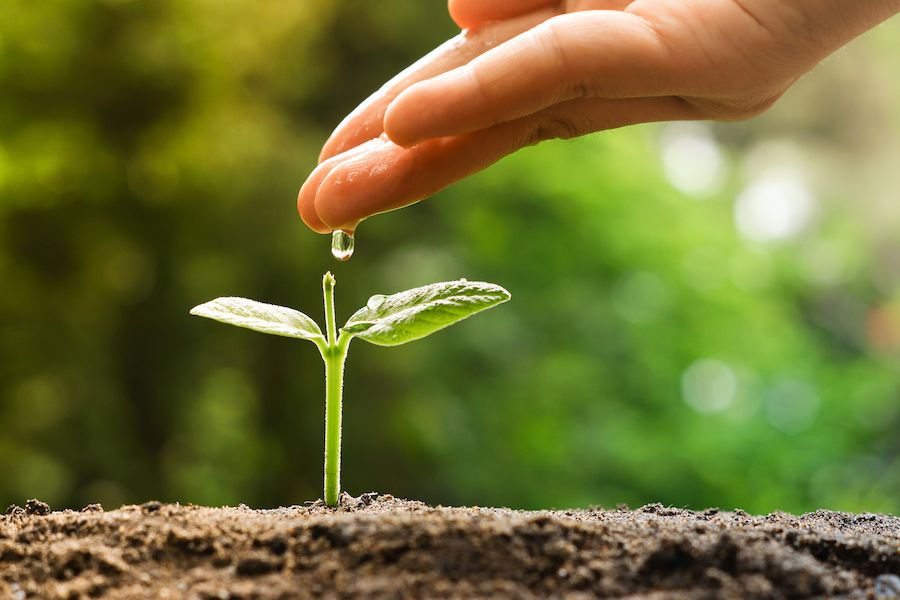 Lead nurturing - plant